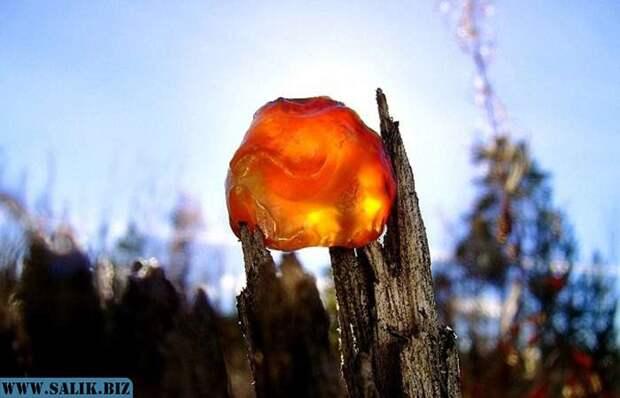 Почему янтарь всегда считался особым камнем: Волшебный Алатырь или слезы богинь