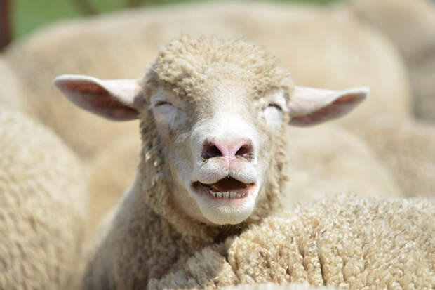 37 фотографий животных, которые вызывают улыбку - 3
