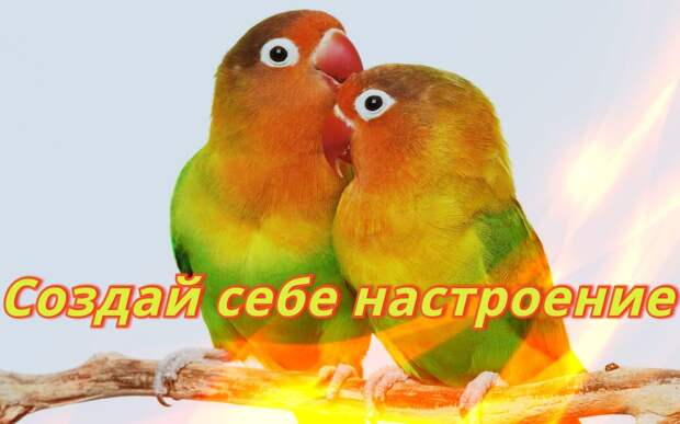 Забавные попугаи