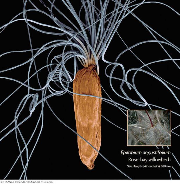 Как выглядят растения под микроскопом