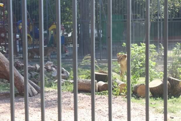 В зооуголке Симферополя прокуратура выявила многочисленные нарушения