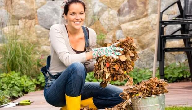 Как приготовить перегной из опавших листьев sunny7 - женский портал
