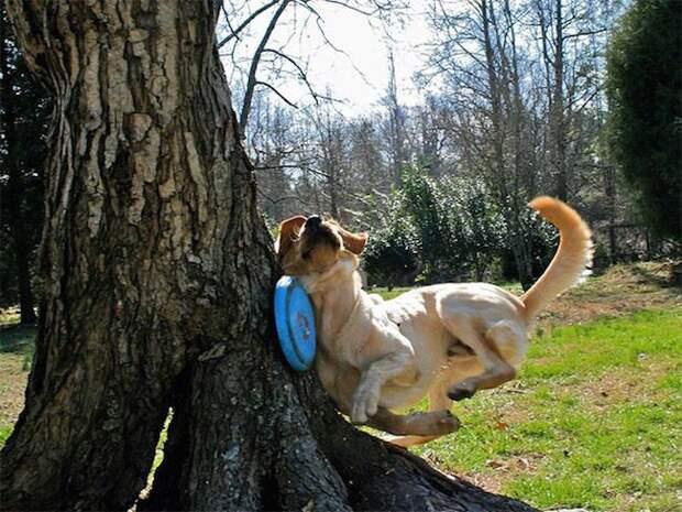 Бежал, бежал, и тут внезапно дерево момент, подборка, провал