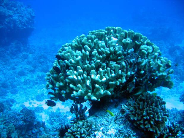 Сказка кораллового рифа