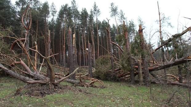 Ураганный ветер до 18 метров в секунду поднимется в Ростове