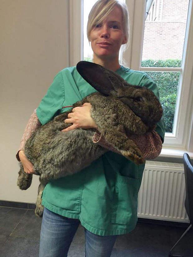 Малыш-кроллик ветеринары, животные