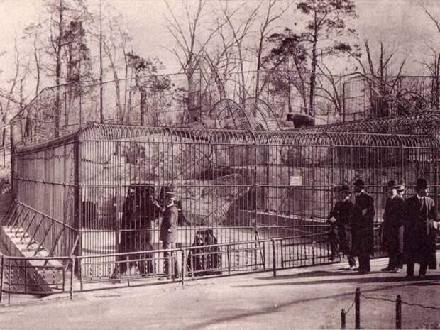 6. Клетка медведя в Нью-Йоркском зоопарке животные, зоопарк