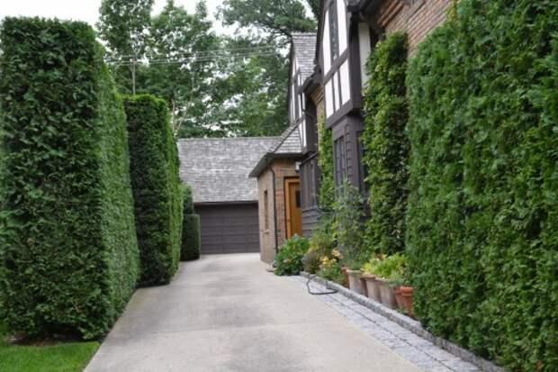 Подъездная дорожка к дому, оформленная строгой живой изгородью