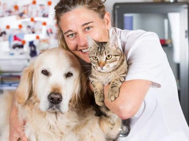 Вы кошатник или собачник?