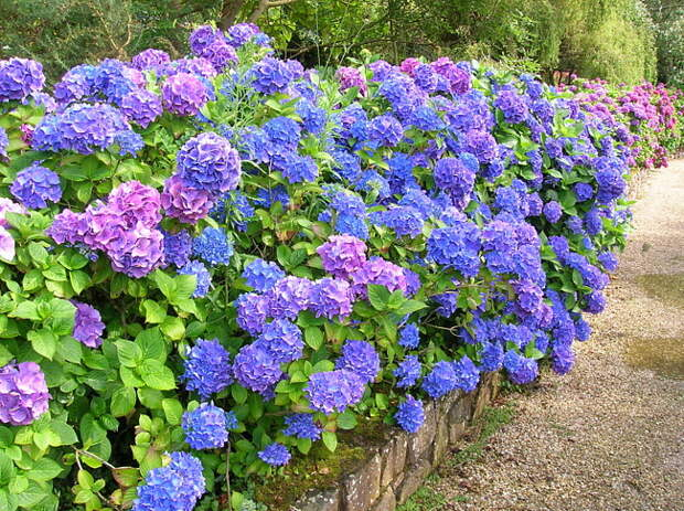 """hydrangea Best Hairstyles Ideas input type=""""hidden"""" name=""""IL_IN_TAG"""" value=""""2"""""""
