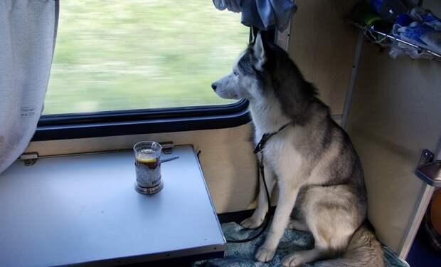 Большинство пассажиров с животными летом перевезли поезда Ярославского направления МЖД