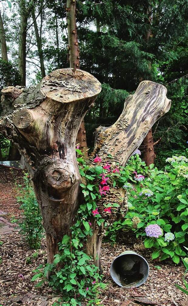 Опорой для лиан могут послужить правильно обрезанные стволы засохшего дерева