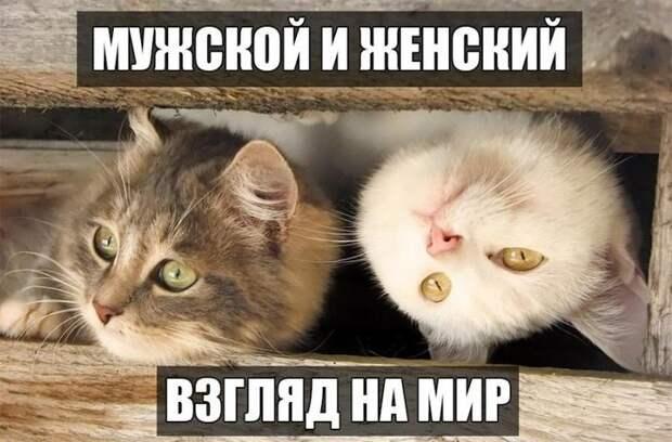 Веселые и позитивные фото животных