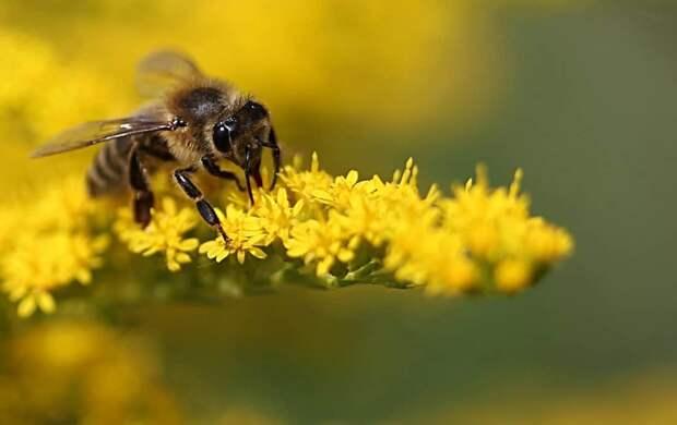 Еще в одном регионе ПФО начали массово гибнуть пчелы