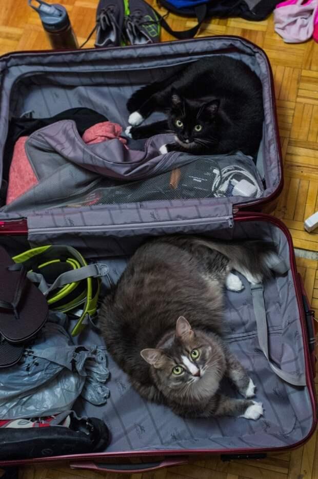 10 домашних любимцев, которые не хотят отпускать хозяина в поездку