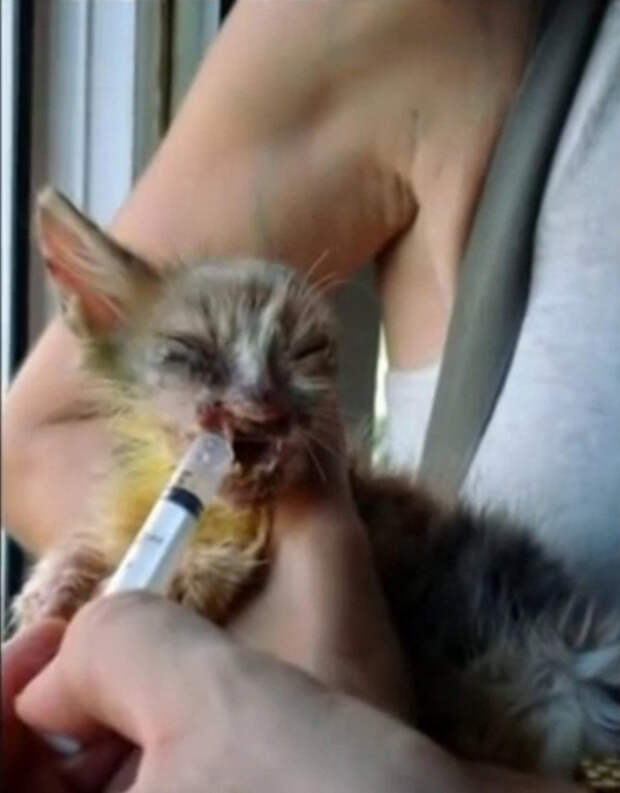 Девочка подобрала этого ободранного котенка на улице