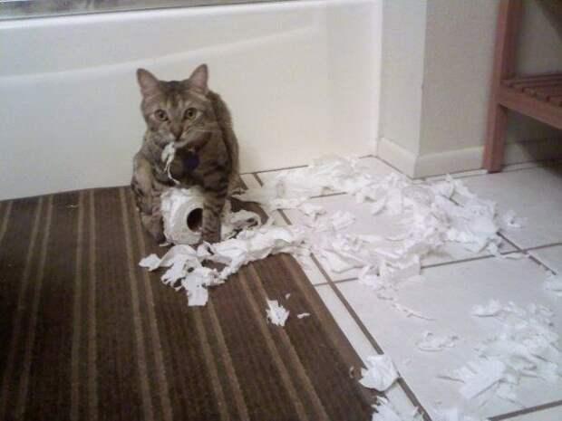 кошка худший сосед по комнате, худшие кошки в мире, кошки шкодничают