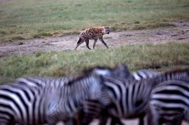Лучшие фотографии животных 2015 года