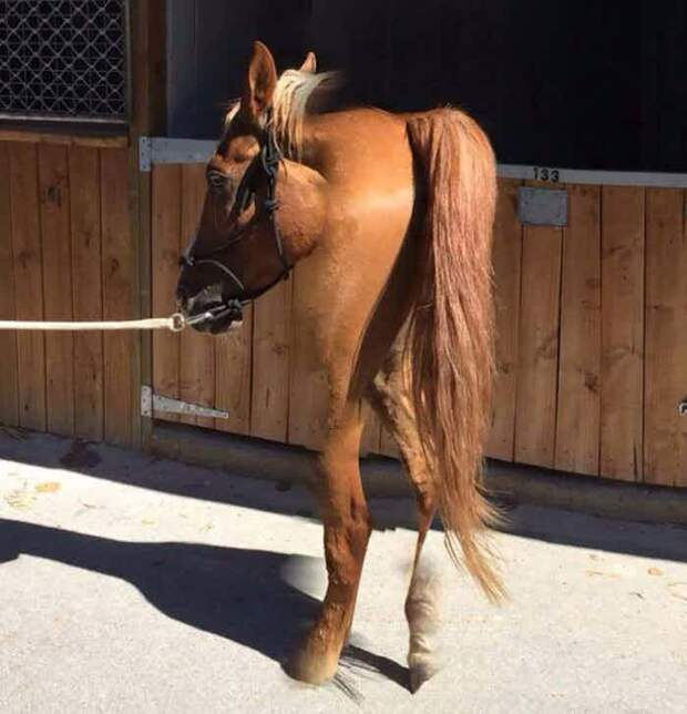 С этой лошадью что-то не так блин комом, кошмары в объективе, неудача, ото, панорамная съемка, первый опыт, смешно, фотограф из ада