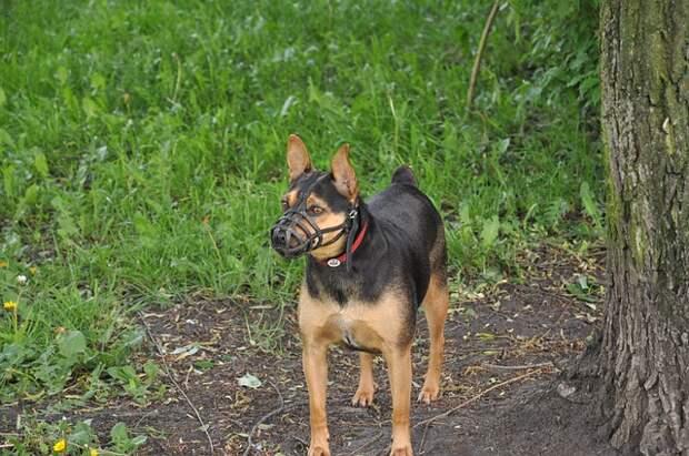 Бойцовские собаки держат в страхе жителей Щукина