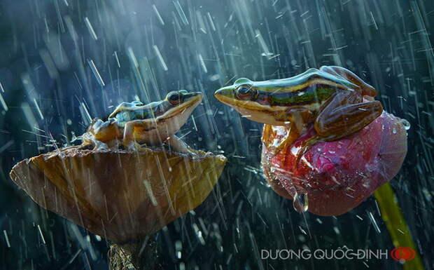 Макрофотографии животных Duong Quoc Dinh