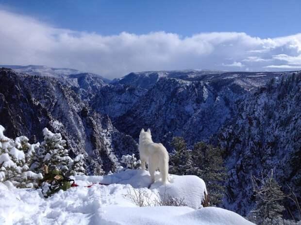 путешествие по США Джона Шторца и его собаки Вольфа (10)