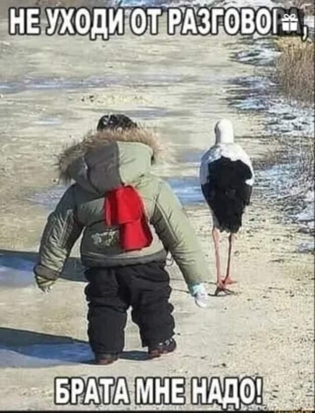 Возможно, это изображение (1 человек, птица, на открытом воздухе и текст «не уходиот разгово брата мне надо!»)