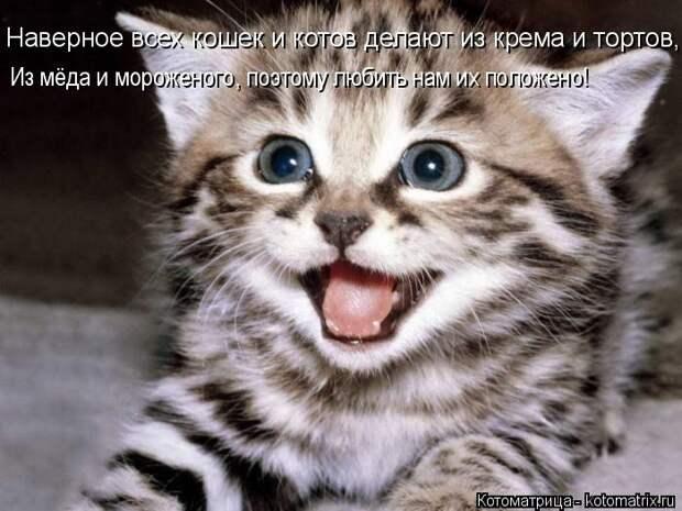 Котоматрица: Наверное всех кошек и котов делают из крема и тортов, Из мёда и мороженого, поэтому любить нам их положено!