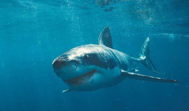 Большая белая акула Количество смертей в год: несколько тысяч Даже малая капля крови, попавшая в воду, может привлечь этого хищника с расстояния в несколько километров. Спастись от нападения большой белой удавалось считанным счастливчикам: из пасти, усеянной тремя тысячами острых как бритва зубов, выбраться очень непросто.