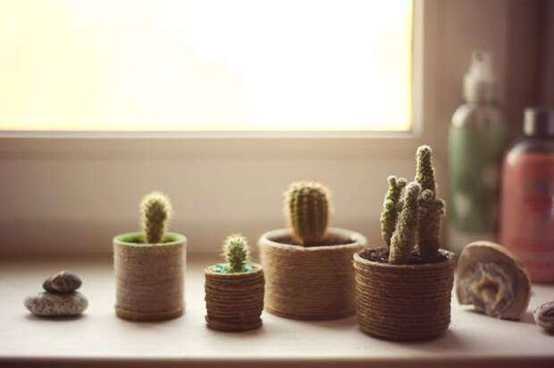 Домик для маленького кактуса (Diy)