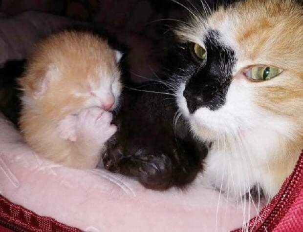 Новорожденные котята и кошка