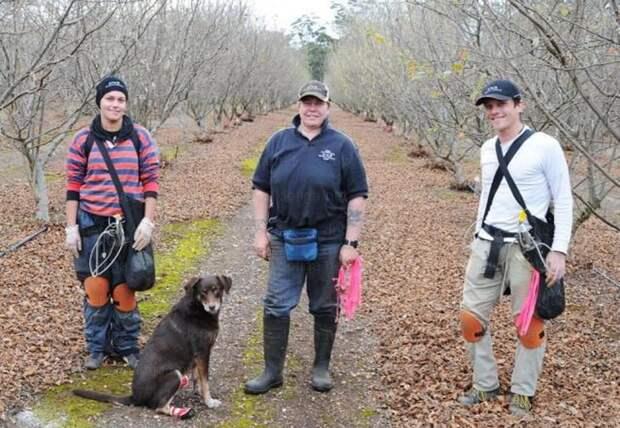 Три австралийца и собака.... дорого, еда, трюфель