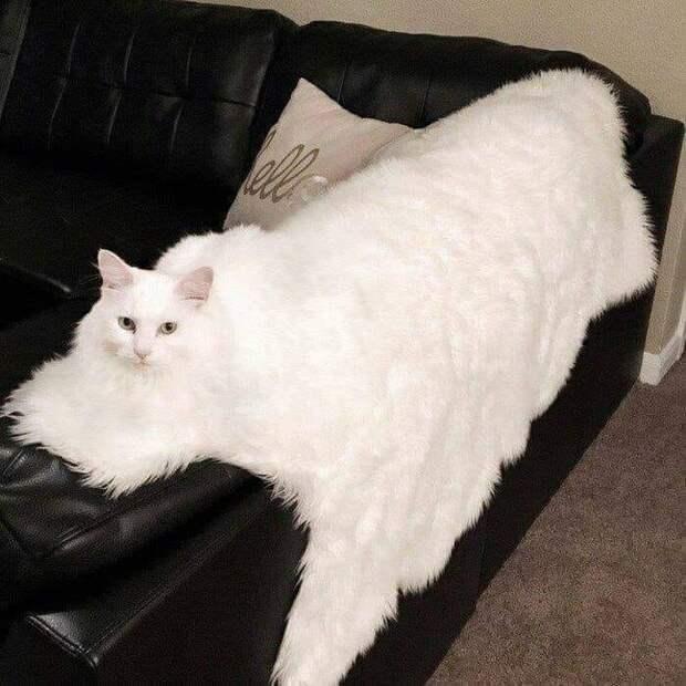 20+ котеек, которые пренебрегают всеми известными законами физики