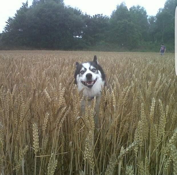 18. «Тот момент, когда пёс нашёл меня во время игры в прятки» домашний питомец, животные, позитив, прикол, собака, умора