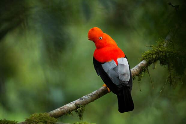 7 самых необычных птиц мира