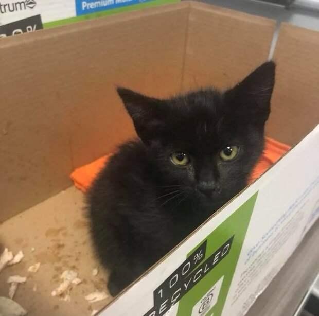 Черный котенок зашел с улицы в офис шерифа и заснул в принтере