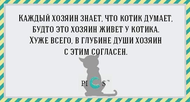 catowner04