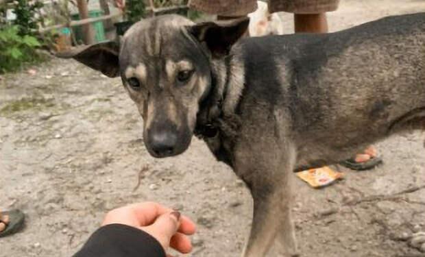 Уличная собака подошла к людям и лаем позвала за собой в лес, где лежал оставленный ребенок
