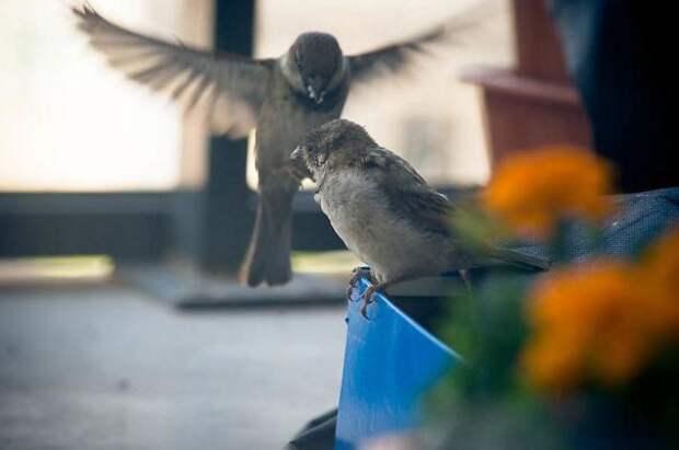 История о птенце воробья и человеческой доброте воробей, доброта