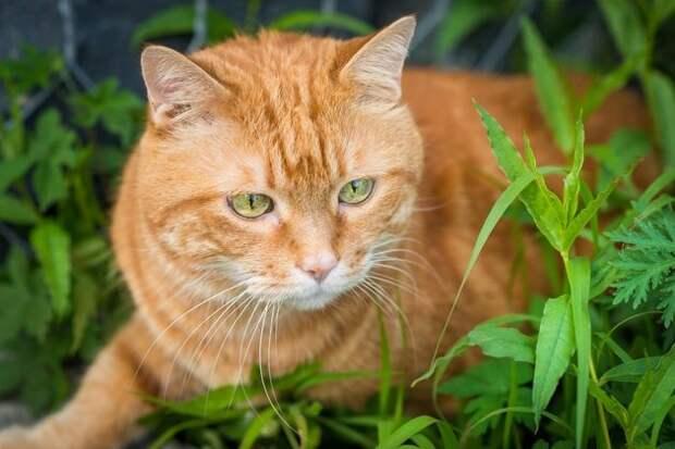Киска, брысь: как уберечь грядки от кошки