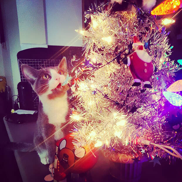 35. Просто ошеломлен  елка, кошка, подборка