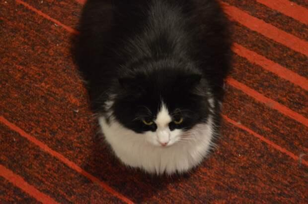 Целую неделю девушка прятала кота от семьи у себя в комнате, думая, что ему будут не рады