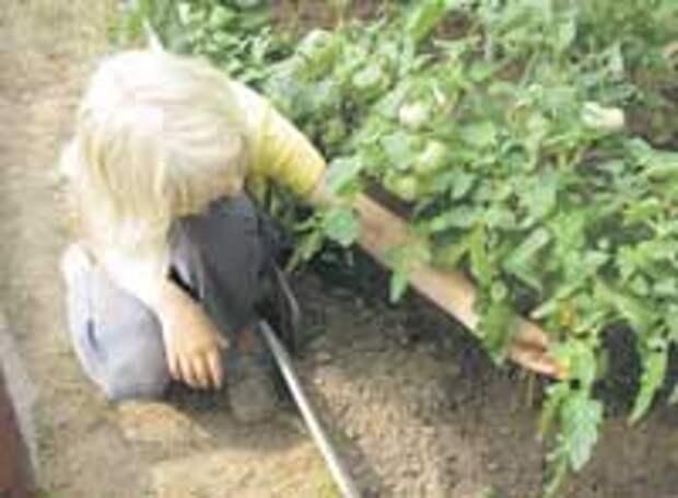 Ускоренный метод выращивания растений