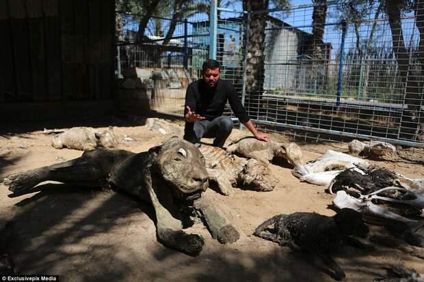 Мёртвые животные