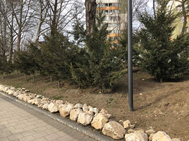 В Симферополе на набережной начали высаживать деревья