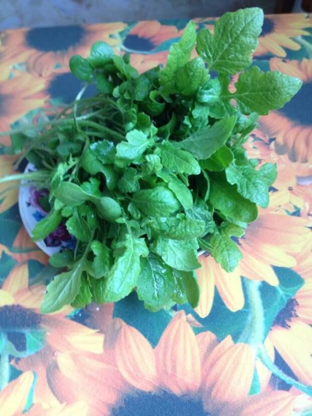 первая зелень на столе
