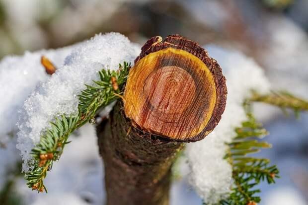 13 января в Удмуртии пройдет мокрый снег