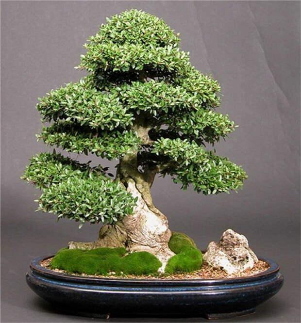 Мои деревья из пряжи «травка»/3576489_01 (465x500, 105Kb)