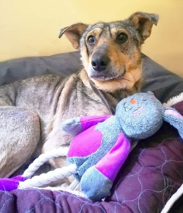 Постепенно пес привык к окружающим Плуто, животные, история, литва, пес, помощь, преображение, спасение