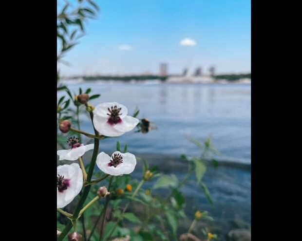 Фото дня: тушинская «орхидея»